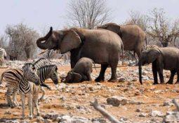 Namibya seyahatinizde yapmanız gereken 3 şey
