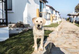 Evcil Hayvanınızla Gidebileceğiniz Oteller Hangileri