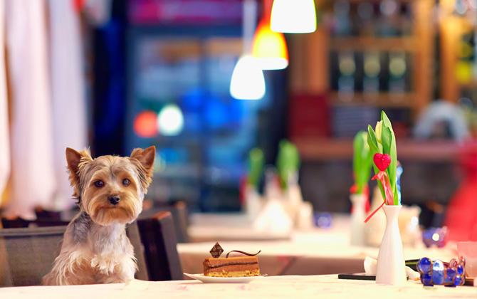Evcil Hayvanınızla Gidebileceğiniz Oteller