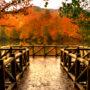 Yedigöller Milli Parkı Nerede, Nasıl Gidilir ve Orada Neler Yapılmalıdır